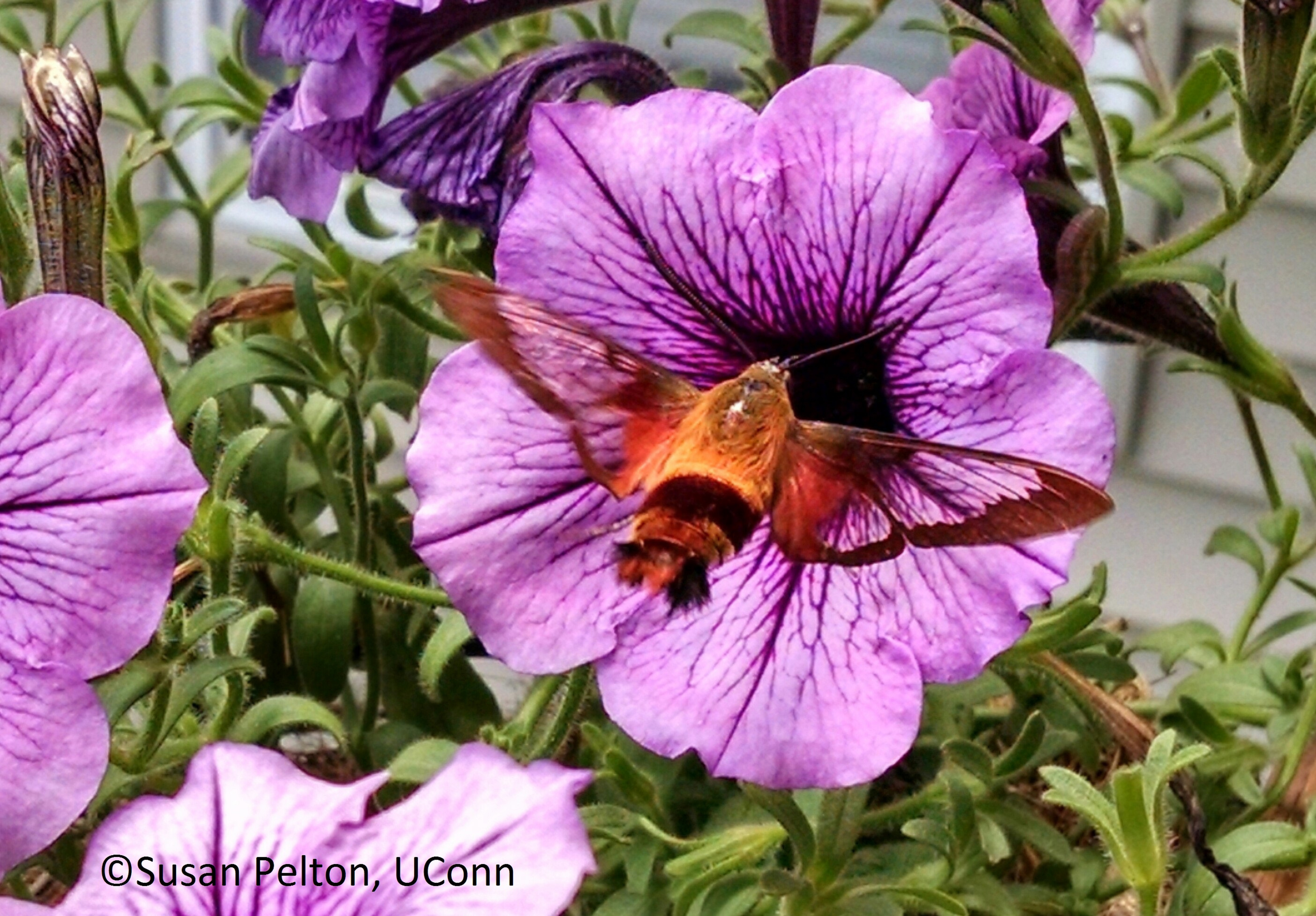 Annuals keep in mind that annuals are fast growing short lived plants they germinate from seed grow bloom set seed and die all within a single growing season izmirmasajfo
