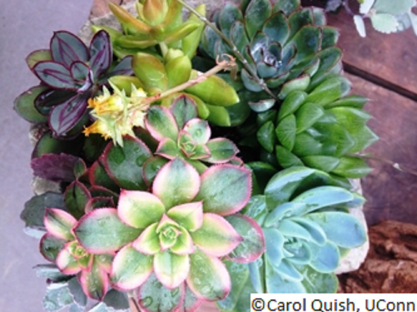 Having Decided Where To Place The Plants, Consider The Selection Of  Containers. Many Kinds Are Available: Ordinary Clay Pots, Wooden Boxes,  Barrels, Tubs, ...