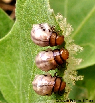 Insecticides: Low Toxicity Options